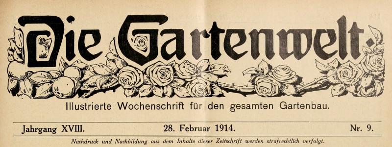 Palme in riviera – Die Gartenwelt 1914