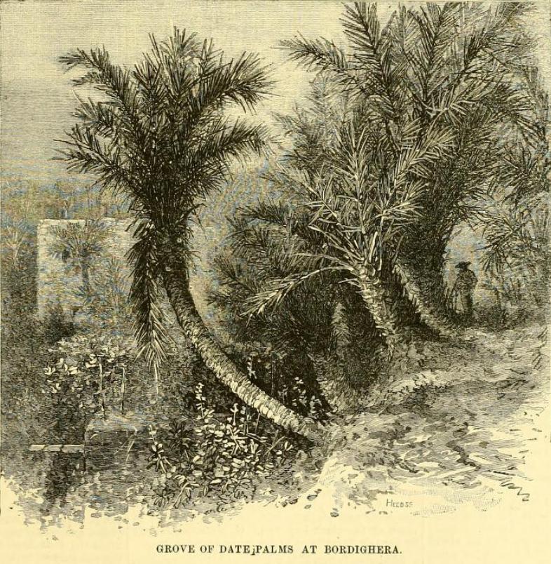 Palme di Bordighera – The Garden 1885